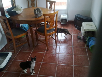 salon de gatos